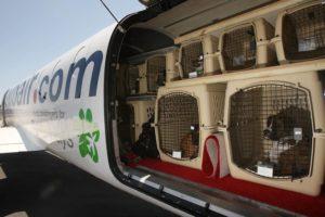 Полет животных в зале воздушного судна