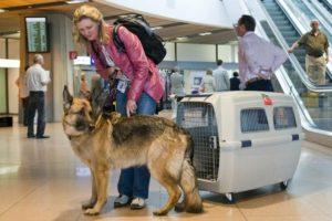 Перевозка комнатного приваженного животного